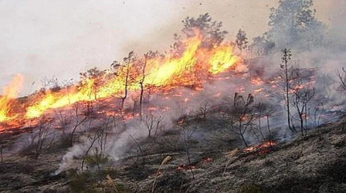 Incendio nel Cilento: acciuffato uno dei piromani