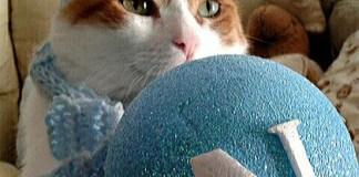 Eduard, la tenera storia del gatto tifoso del Napoli