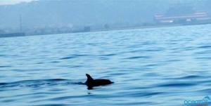 delfini-bagnoli-oceanus02