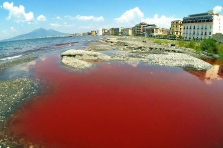 chiazze rosse mare