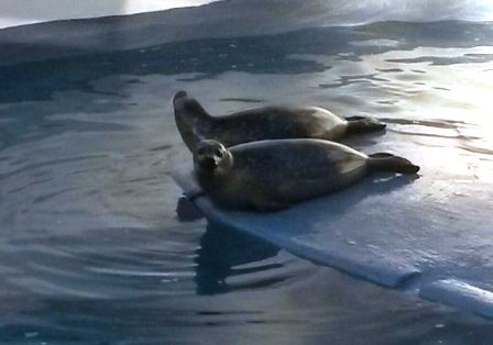 foche zoo