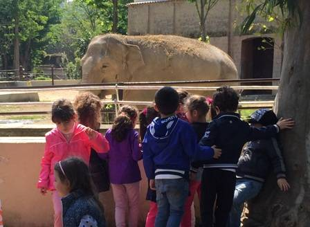 bambini elefante zoo