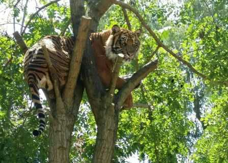 tigre zoo napoli