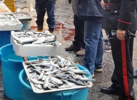 sequestro-prodotti-ittici