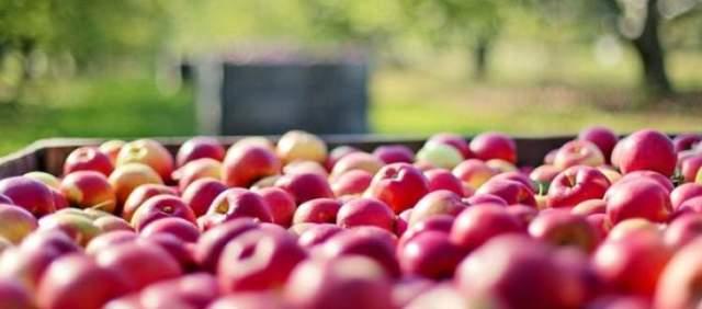 Made in Irpinia, a Cassano Irpino (AV) si parla di mela cassanese