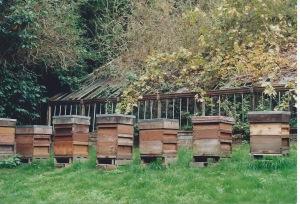 honey1 2
