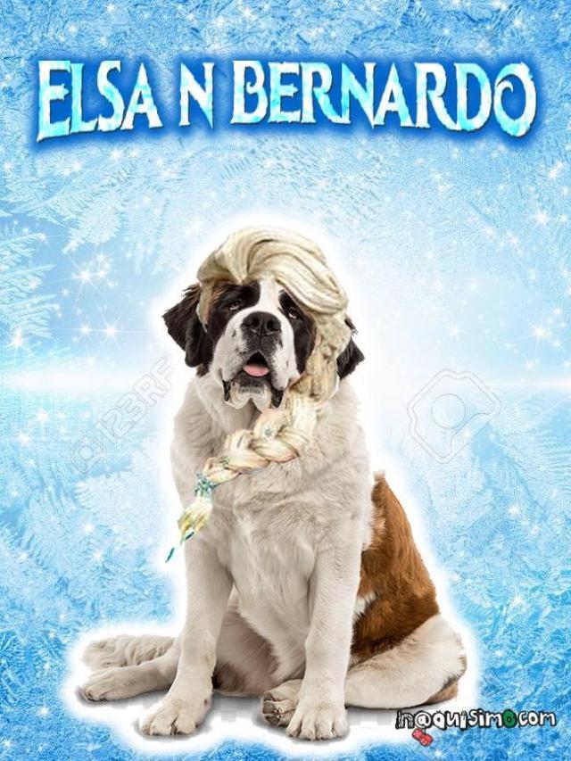 Memes de elsa Elsanbernardo