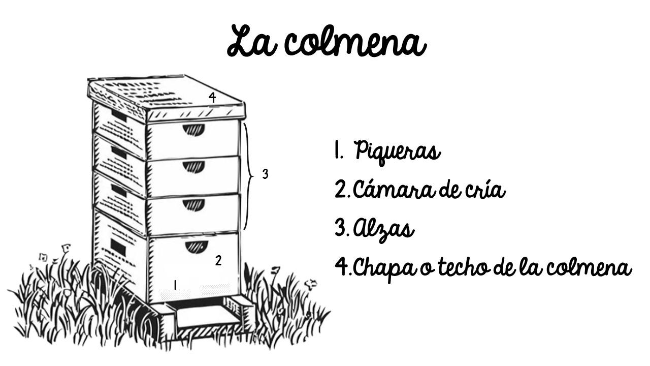 Estructura interna de las colmenas de abejas