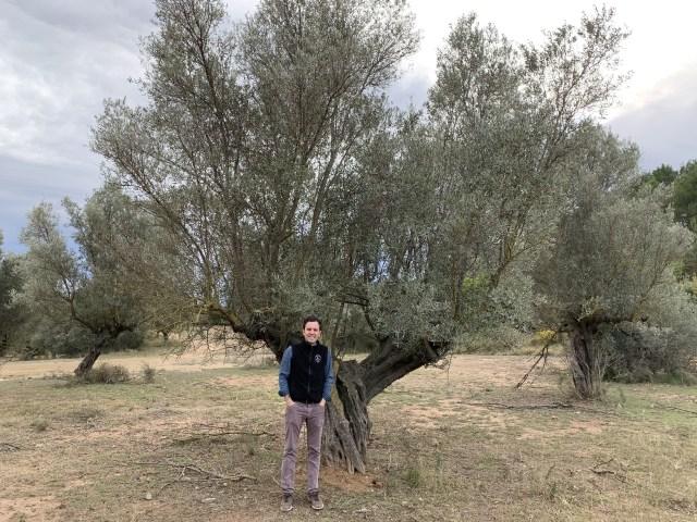 Gonzalo Urculo_olive tree