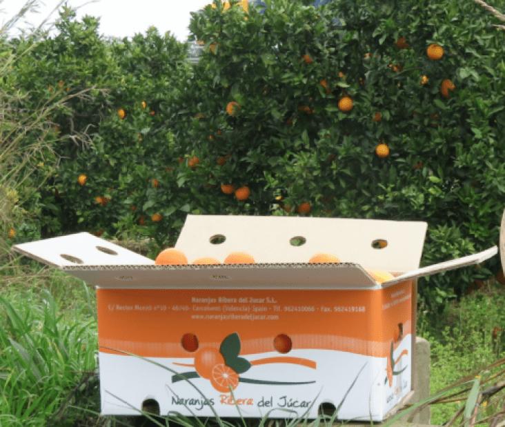 Caja-clementinas-almuerzo-oficina-ideal-Naranjas-ribera-del-jucar