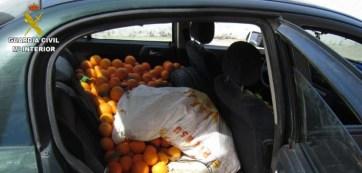 robo-naranjas-03