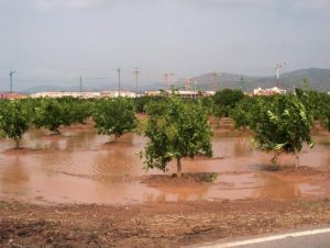 excesiva-lluvia-naranjos-inundados