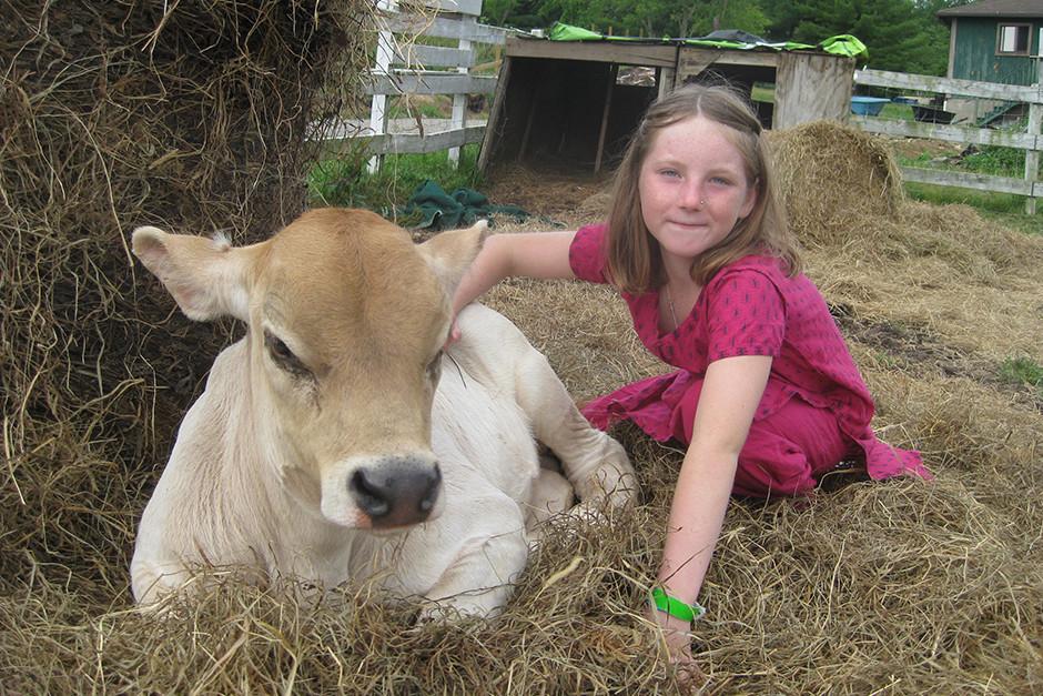 New Vrindaban Mengambil Langkah Menuju Swasembada Produk Susu