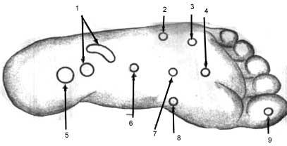 роскошная картинка: массаж точки на ногах