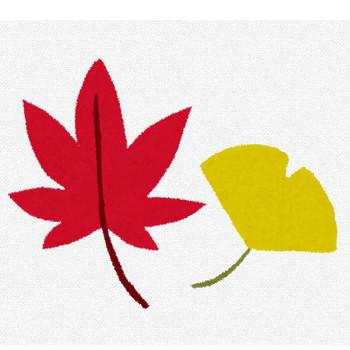 紅葉のイラスト「赤いもみじと黄色いイチョウ」 | かわいいフリー素材集 いらすとや