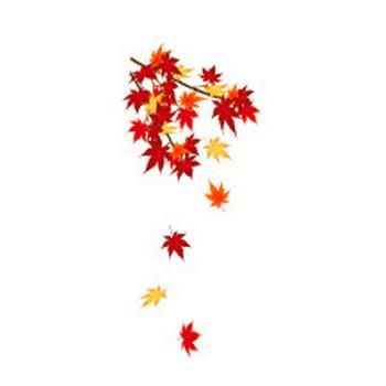 無料素材の『季節・行事素材のイラスト市場』秋の素材・もみじ(紅葉)のイラスト