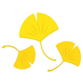 無料素材 | 黄色く色づいたイチョウの葉を描いたイラスト。秋の紅葉のデザインに。