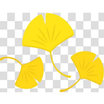 黄葉したイチョウの葉っぱのフリーイラスト素材
