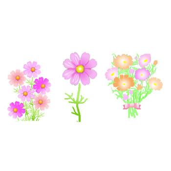 コスモス秋桜のイラスト素材背景素材フリー無料 素材屋じゅん 秋の花
