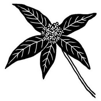キンモクセイ(金木犀)/秋の花/無料【白黒イラスト素材】