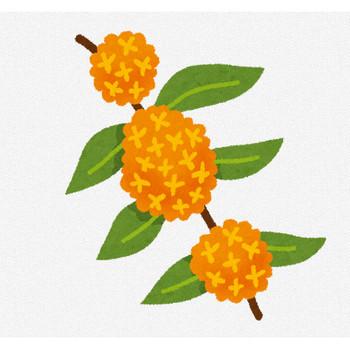 金木犀のイラスト(花) | かわいいフリー素材集 いらすとや