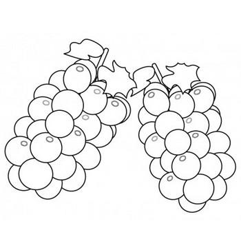 ぬりえ素材・ぶどう(葡萄)・マスカット・果物 | イラスト無料・かわいいテンプレート