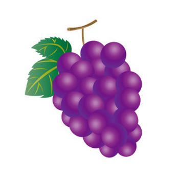 葡萄のフリーイラスト素材 ( イラストレーション ) - ことらの絵日記 - Yahoo!ブログ
