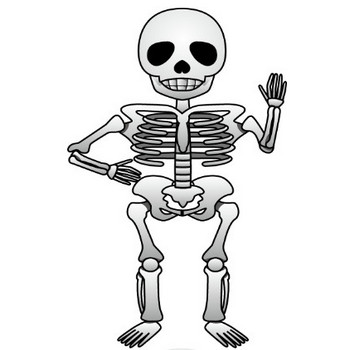 10月8日骨と関節の日-骸骨のイラスト 無料ビジネスイラスト素材のビジソザ