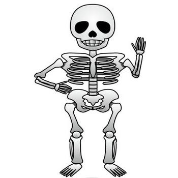 10月8日骨と関節の日-骸骨のイラスト|無料ビジネスイラスト素材のビジソザ