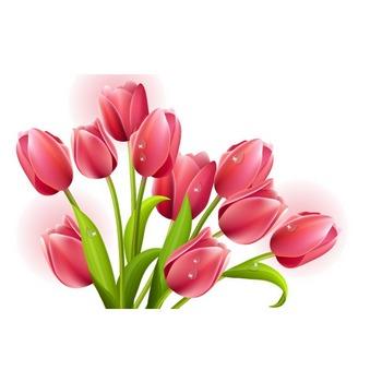 チューリップの花束ベクトル ベクター画像   無料ダウンロード