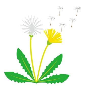 春の花3-06-たんぽぽ-花の無料イラスト素材-イラストポップ