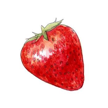 浩司の水彩画  「いちご」  無料イラスト・フリー素材  おしょくじ處 今・日本料理 小や町