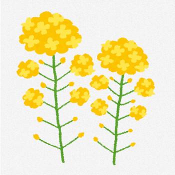 菜の花のイラスト | かわいいフリー素材集 いらすとや