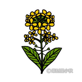 菜の花のイラスト | 素材屋小秋