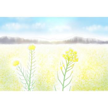 菜の花のイラスト - 無料イラストのIMT 商用OK、加工OK