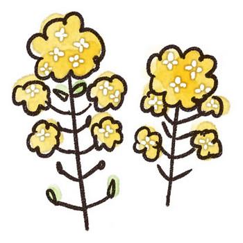 菜の花のイラスト(花): ゆるかわいい無料イラスト素材集