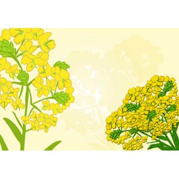 菜の花イラスト - 可愛い黄色い花の無料画像素材集☆ - チコデザ