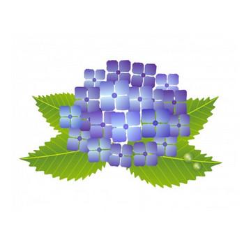 梅雨・紫陽花(あじさい)イラスト素材01 | イラスト無料・かわいいテンプレート