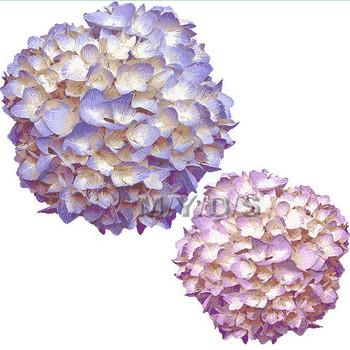 (紫陽花の花)アジサイの花のイラスト・条件付フリー素材集