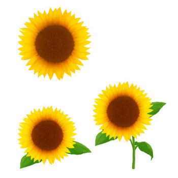 花イラスト無料素材: ひまわり