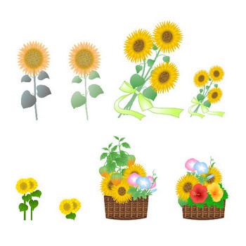 夏の花【向日葵・ひまわり・ヒマワリ素材】-背景・イラスト(フリー素材)