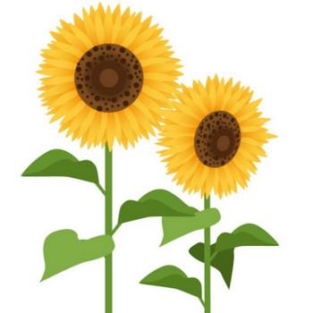 2本のひまわりが咲いているイラスト - 無料イラストのIMT 商用OK、加工OK