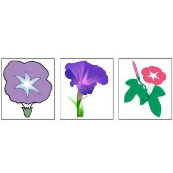 朝顔(あさがお)の花のイラスト・画像/無料のフリー素材集【百花繚乱】