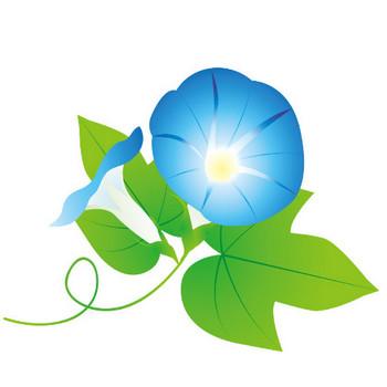 [無料イラスト] 青色のあさがお - パブリックドメインQ:著作権フリー画像素材集