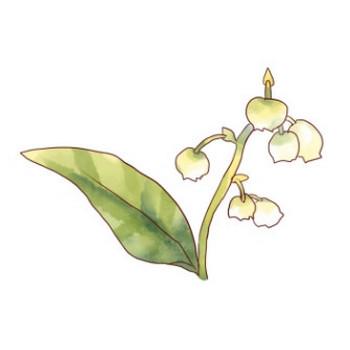 白いスズランの花のイラスト - 無料イラストのIMT 商用OK、加工OK