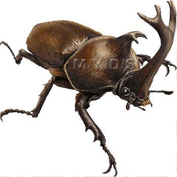 (兜虫)カブトムシのイラスト・条件付フリー素材集