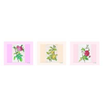 薔薇のイラスト、塗り絵