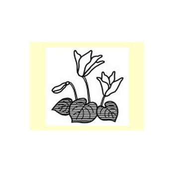 ポインセチア・シクラメン1/冬の花/無料イラスト【白黒イラスト素材】