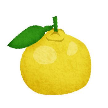 柚子 | フリーイラスト素材 イラストリウム