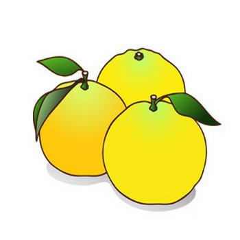 柚子 - 素材【クリップアート】 - 彩クリWEB
